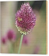 Beautiful Pink Flower With Bee Wood Print
