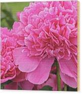 Beautiful Pink Peony Albert Crousse Paeonia Lactifora Albert Cro Wood Print