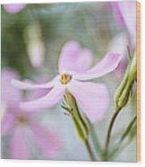 Beautiful Pink Spring Flowers Wood Print