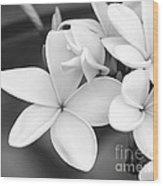 Beautiful Plumeria In Black And White Wood Print