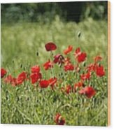 Beautiful Poppies 1 Wood Print