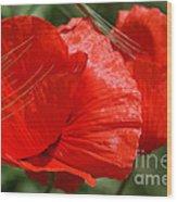 Beautiful Poppies 10 Wood Print