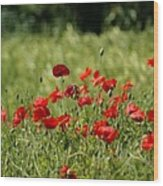 Beautiful Poppies 3 Wood Print