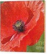 Beautiful Poppies 6 Wood Print