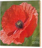 Beautiful Poppies 7 Wood Print