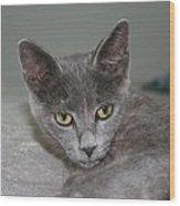 Beautiful Portait Of A Grey Russian Tabby Cat Wood Print