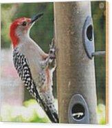 Beautiful Red Belly Woodpecker Jr Wood Print