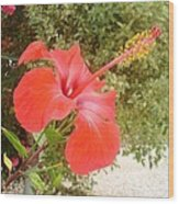 Beautiful Red Hibiscus Flower With Garden Background Wood Print