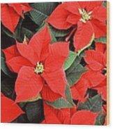 Beautiful Red Poinsettia Christmas Flowers Wood Print