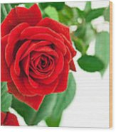 Beautiful Red Roses Flower Wood Print by Boon Mee