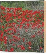 Beautiful Red Wild Anemone Flowers In A Spring Field Wood Print