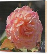 Beautiful Rose Blossom Wood Print