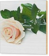 Beautiful Rose On White Wood Print