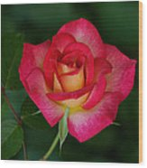 Beautiful Rose Wood Print by Sandy Keeton