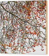 Beautiful Rowan 1 Wood Print