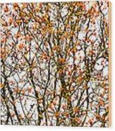 Beautiful Rowan 10 - Square Wood Print