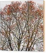 Beautiful Rowan 11 Wood Print