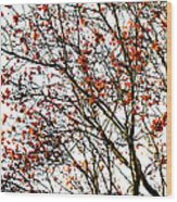 Beautiful Rowan 3 - Square Wood Print
