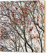 Beautiful Rowan 3 Wood Print