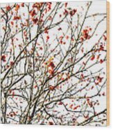 Beautiful Rowan 4 Wood Print