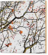 Beautiful Rowan 7 Wood Print