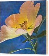 Beautiful Single Rose Wood Print