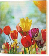 Beautiful Spring Tulips Wood Print by Boon Mee