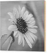 Beautiful Sunflower In Monocrome Wood Print