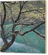 Beautiful Tree Over Blue Water Wood Print