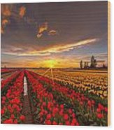Beautiful Tulip Field Sunset Wood Print