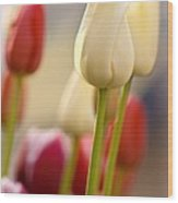 Beautiful Tulips Wood Print