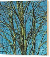 Beautiful Turquoise Sky Wood Print