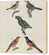 Beautiful Und Strange Foreign Birds Wood Print