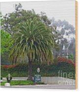 Beautiful Ventura Palm Wood Print