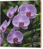 Beautiful Violet Purple Orchid Flowers Wood Print