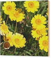 Beautiful Weeds 32655 Wood Print