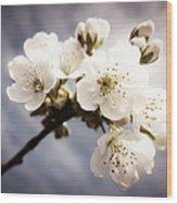 Beautiful White Blossoms Wood Print