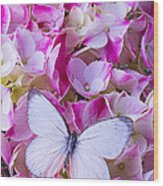 Beautiful White Butterfly Wood Print