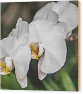 Beautiful White Orchids Flower Bloom Wood Print
