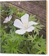 Beautiful Wild Geranium Wood Print