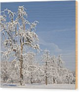 Beautiful Winter Day With Snow Covered Trees And Blue Sky Wood Print