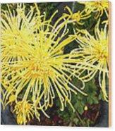 Beautiful Yellow Flower Wood Print