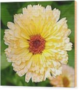 Beautiful Yellow Marigold Goldbloom Close Up  Wood Print