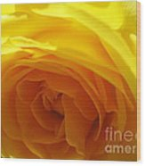 Yellow Rose Macro Wood Print