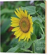 Beautiful Yellow Sunflower In Full Bloom Wood Print