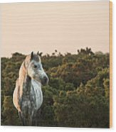 Beauttiful Close Up Of New Forest Pony Horse Bathed In Fresh Daw Wood Print