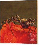 Beauty And The Bug Wood Print