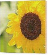 Beauty Beheld - Sunflower Wood Print