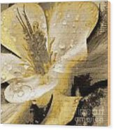 Beauty IIi Wood Print