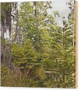 Beauty In  A Swamp Ll Wood Print